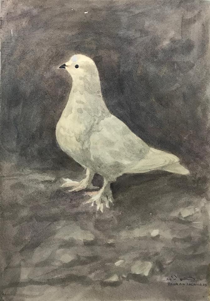 De kleine witte duif